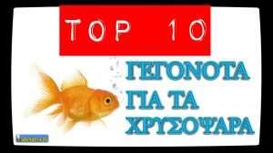 top-10-xrysopsara