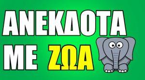 Ανέκδοτο με ζώα - Η χελώνα σε μπαράκι